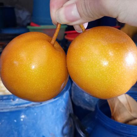 酸沙梨果-腌酸沙梨果-腌制酸沙梨果批发零售